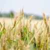 Imprenditrici agricole